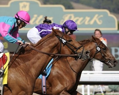 The 26th World Championships got off to a thrilling start in the $500,000 Breeders' Cup Marathon when Man of Iron (right) hung on to defeat 9-year-old Cloudy's Knight (left) by a nose Nov. 6 at Santa Anita Park