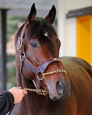 Blame (Arch - Liable by Seeking the Gold) was born on May 2, 2006