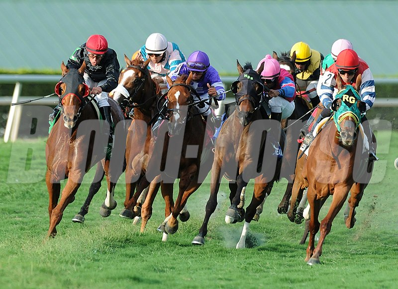 Final turn of the Grade III Suwannee River Stakes eventually won by Parranda at Gulfstream Park.