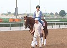 Dubai World Cup Horses at Meydan March 24
