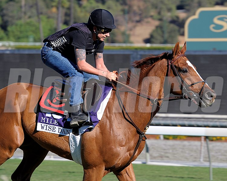 Caption:  Wise Dan on the turf course 