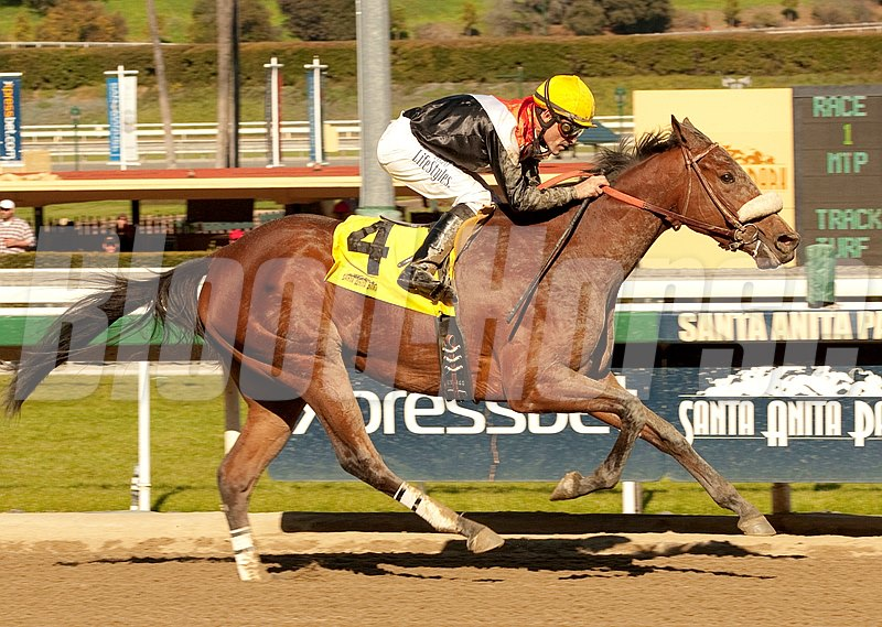 Jockey Gary Stevens make his comeback complete with a victory in the first race Saturday,  January 12, 2013 at Santa Anita Park, Arcadia, CA aboard the Tom Proctor-trained filly, Branding, winning from of the pace.  Stevens ended his seven year retirement last Sunday.