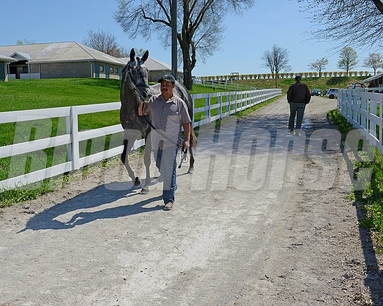 Caption: Horse and groom heading to barn after trip to spit/detention barn after race