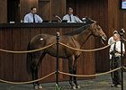 Median Rises at OBS Spring Sale Opener