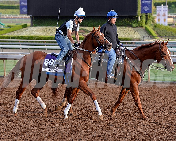 Tapiture on track on Oct. 26, 2014, at Santa Anita in preparation for the Breeders' Cup.