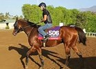 Breeders' Cup News Update for Oct 30, 2014