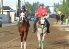 BC 2014: California Chrome Work