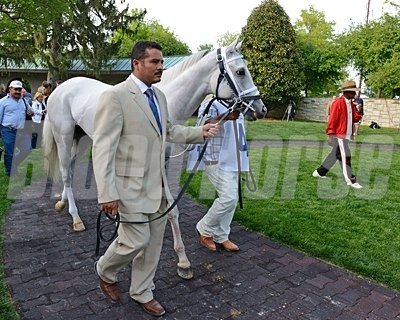 Hansen in the Keeneland Paddock prior to the Blue Grass Stakes.