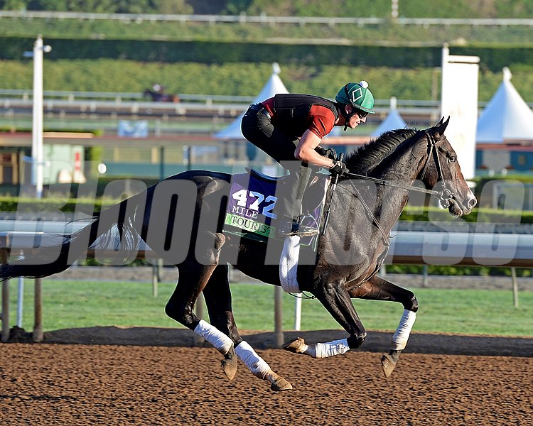 Caption:  Tourist
