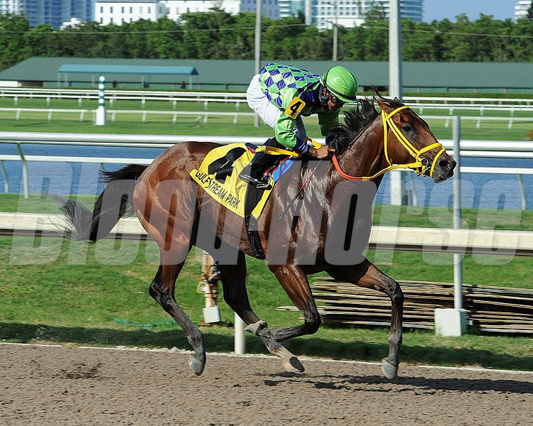 Any questions about the future for Wildcat Red that may have been raised by his troubled 18th-place finish in the Kentucky Derby Presented by Yum! Brands (gr. I) were emphatically dismissed at Gulfstream Park, where the 3-year-old son of D'wildcat  romped to a 10 1/4-length victory in the $90,000 Quality Road Stakes.