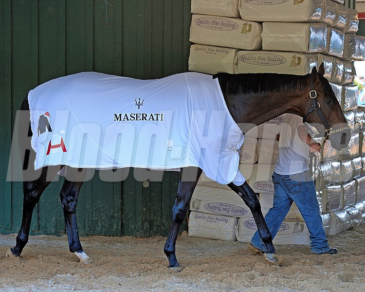 Caption:  After his bath Orb in his Maserati blanket walks the shedrow. Phipps and Janney silks on blanket as well.