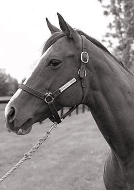 Genuine Risk was the oldest living Kentucky Derby winner at the time of her death on Aug. 18, 2008.