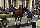 Fasig-Tipton Kentucky Winter Mixed Sale: Day 1