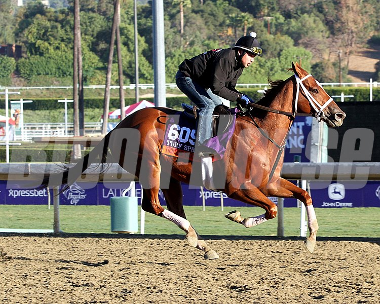 Tightend Touchdown on the track at Santa Anita Park on October 31, 2013. Photo By: Chad B. Harmon