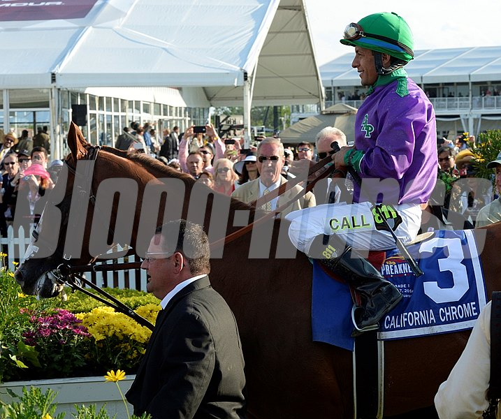 California Chrome, with jockey Victor Espinoza in the irons enters the winner's circle with assistant trainer Alan Sherman leading the way after winning the second leg of Thoroughbred racing's Triple Crown.