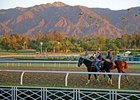 2012 Breeders' Cup Sights