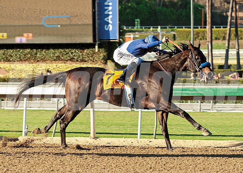 Points Offthebench and jockey Mike Smith power home to win the Grade I, $250,000 Santa Anita Sprint Championship, Saturday, October 5, 2013 at Santa Anita Park, Arcadia CA.
