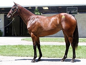 Rea Lands Desert Party Filly for $460,000