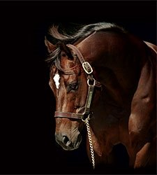 Pensioned Top Maryland Sire Not For Love Dies