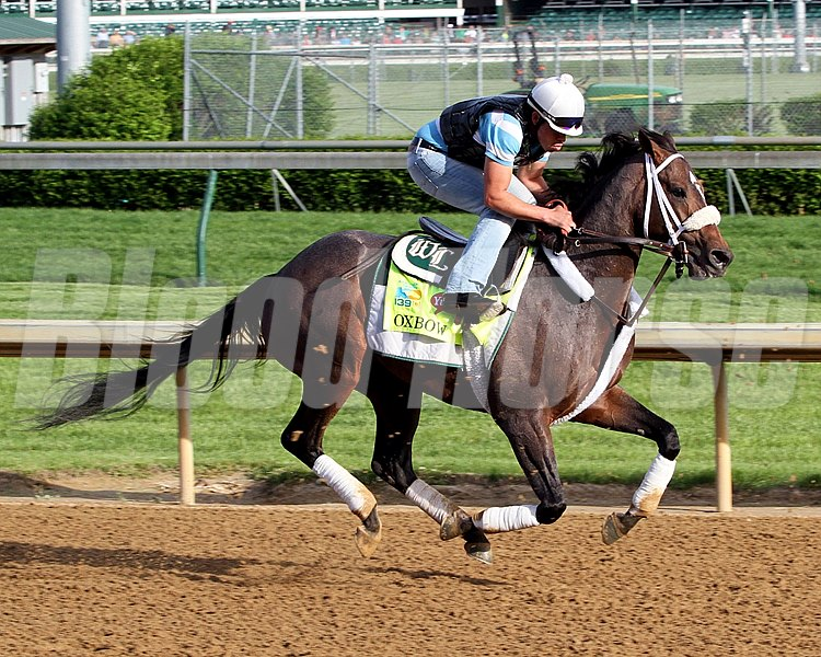 Oxbow on the track at Churchill Downs on May 2, 2013.