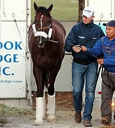 Blue Grass Hopefuls Train at Keeneland