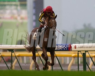 Orfevre wins the 2011 Japanese Derby.