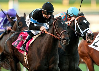 Shared Belief Horse Profile Bloodhorse
