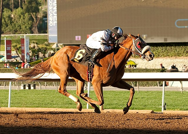 Warren's Veneda claimed her first graded stakes victory with a wide closing drive in the $200,000 Grade II Santa Maria Stakes at Santa Anita Park, continuing a path of improvement for the 5-year-old mare by Affirmative.
