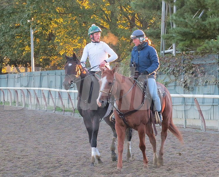 A chilly, cloudless October morning at Beautiful Belmont provided the setting for trainer Bill Mott and his band of Breeders' Cup big guns. First it was Royal Delta who hit the track at 6:45 for her half-mile work.