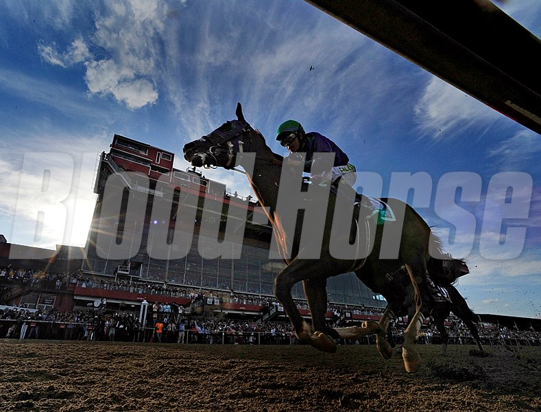 California Chrome passes a full grandstand as he approaches the finish line.