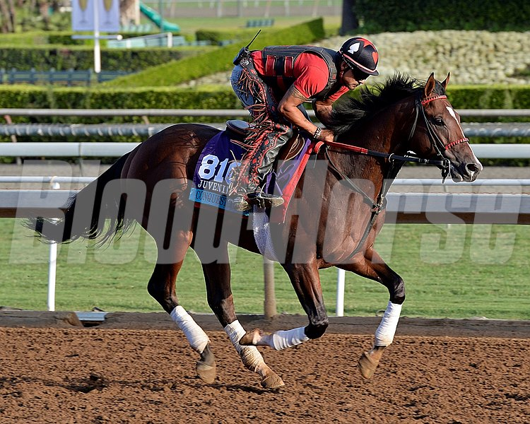 Caption:  Conquest Typhoon