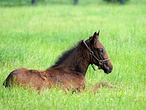 Foal Crop Expected to Drop 8.5% in 2012