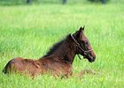 Feb. 1 is Deadline to Name Foals of 2009