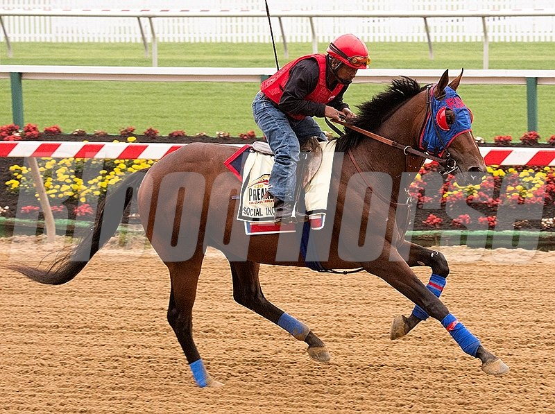 Social Inclusion works out at Pimlico in preperation for the 2014 Preakness Stakes.