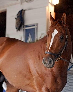 At the 37th Eclipse Awards, Curlin took home top honors as 2007 Horse of the Year.