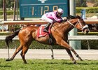 Get Happy Mister Scores in San Simeon