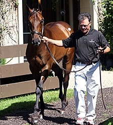 Stonestreet Lands Pioneerof the Nile Colt