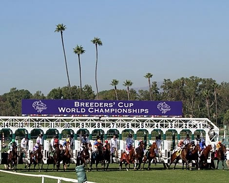 The field for the Breeders' Cup Juvenile Turf leave the starting gate at Santa Anita Park on November 3, 2012.