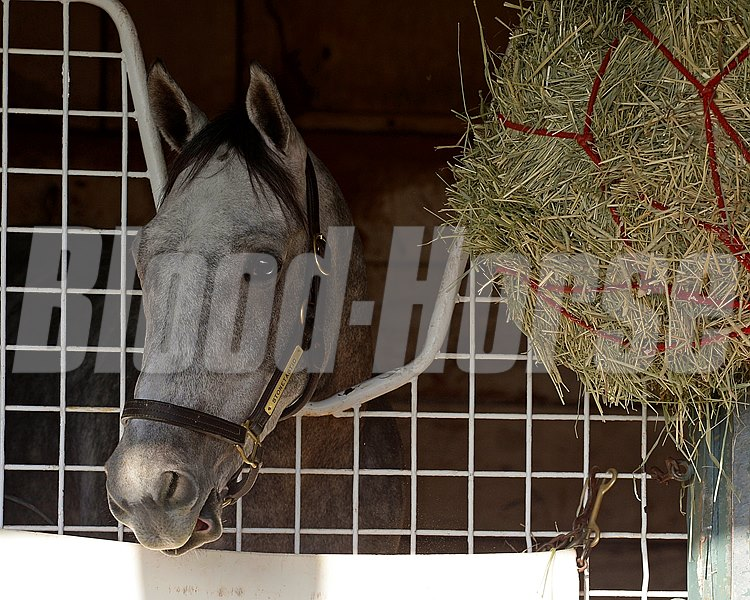 Caption:  Stonetastic