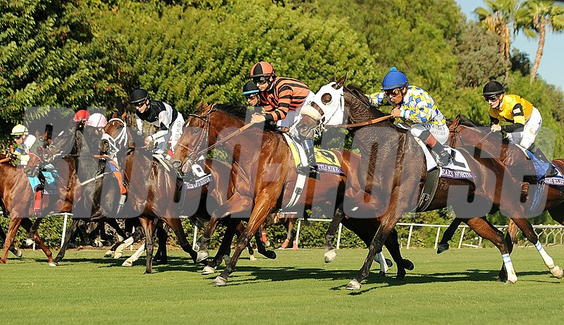 Horses break from the gate in the Breeders' Cup Turf at Santa Anita.