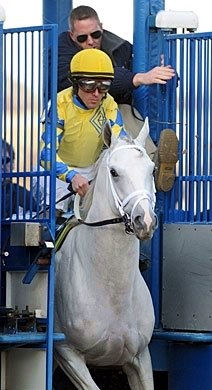 2011 two-year-old Champion Hansen leaves the starting gate in the 2012 Gotham Stakes.