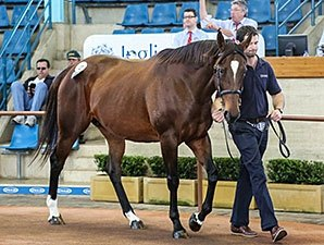Solis Buys Top Two on Inglis' Opening Day