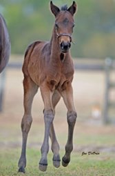 GI Winner Telling Represented by First Foals
