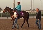 Dubai Wold Cup 2015: Trackwork March 27, 2015