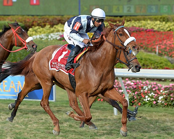 Flaxman Holdings' homebred two-time Eclipse Award winner Main Sequence powered to victory in his season debut, taking the $200,000 Grade II Mac Diarmida Stakes at Gulfstream Park with an impressive kick in the final furlong.