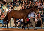 Nine Seven-Figure Horses Boost Inglis Sale