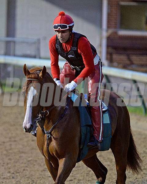 Caption: California Chrome on the track for the first time, jogging counterclockwise around track under tight hold.