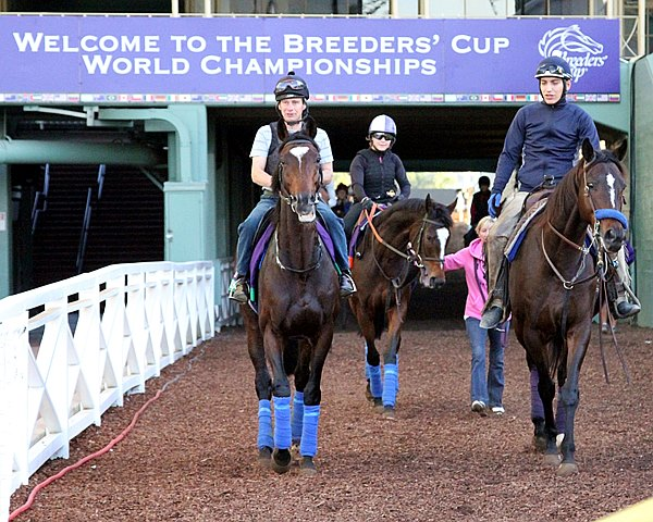 Welcome to the start of the 2014 Breeders' Cup World Championships at Santa Anita Park in California.