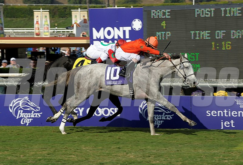 Caption: Tapitsfly with Robby Albarado wins the Breeders' Cup Juvenile Fillies Turf.