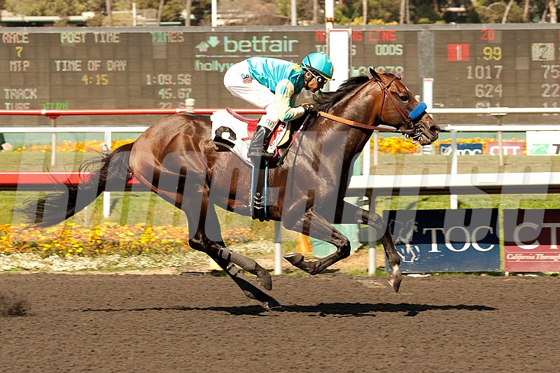After completing eight months of rehabilitation from life-threatening medical issues, Grade I winner Paynter is back, winning in his first race back at Hollywood Park, Inglewood, CA.